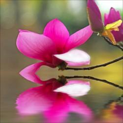 Stickers muraux déco : orchidée