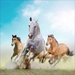 Stickers muraux déco : chevaux
