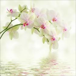 Stickers muraux déco : orchidée blanc