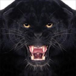 Stickers muraux déco : panthère noir