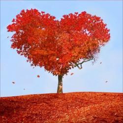 Stickers muraux déco : arbre coeur