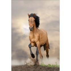 Stickers muraux déco : cheval