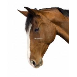 Sticker Tête de cheval 2