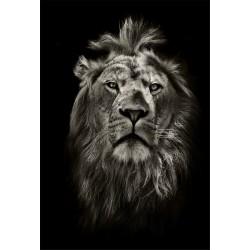 Stickers muraux déco : lion
