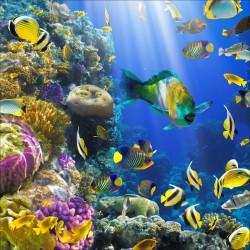 Sticker boites aux lettres déco petit poissons tropicaux 30x30cm