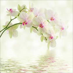 Sticker boites aux lettres déco orchidée blanche 30x30cm