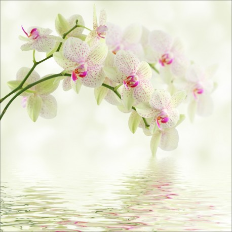 orchidee 7 lettres