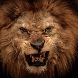 Sticker boites aux lettres déco rugissement lion 30x30cm