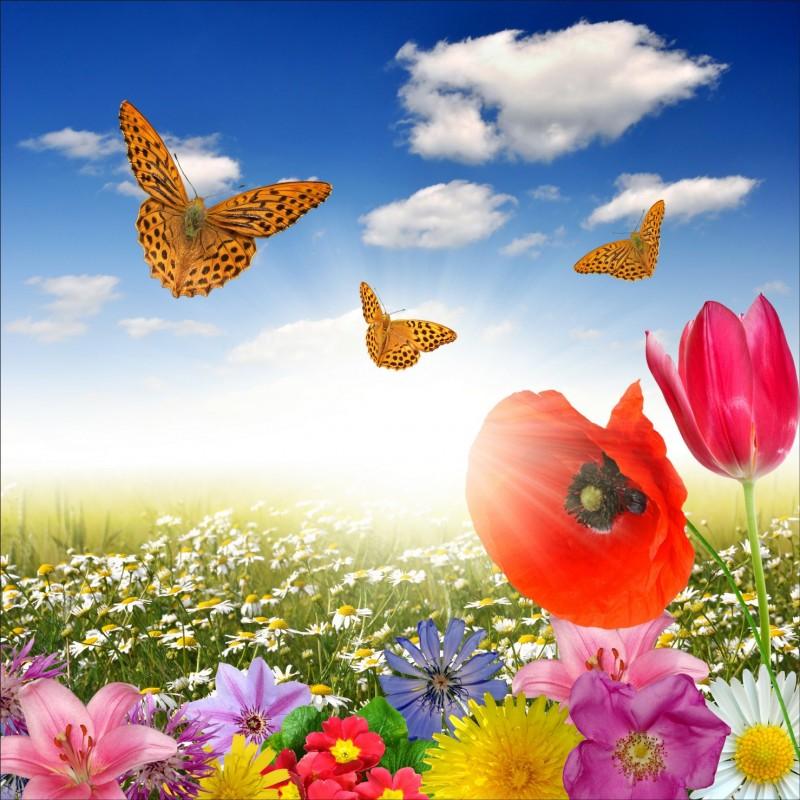 papier peint gant dco champ de fleur papillon 250x250cm