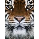 Sticker Lion Geant