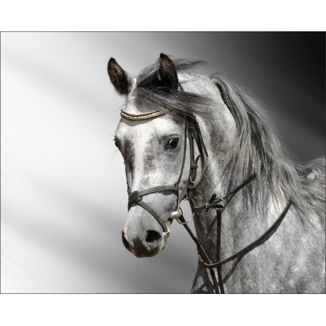 Sticker Cheval Gris