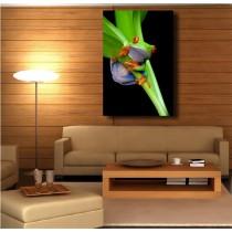 Tableaux toile déco rectangle verticale grenouille