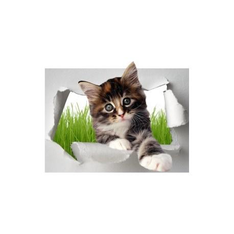 Sticker Trompe l'oeil Chat