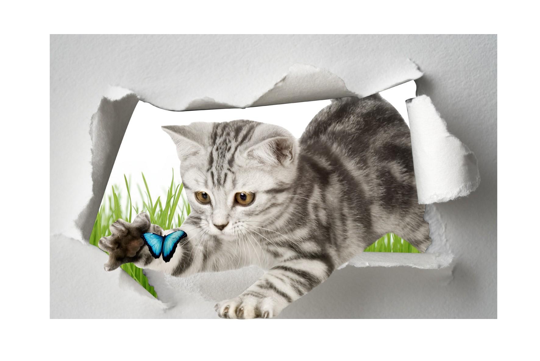 Dessin oeil de chat - Stickers muraux trompe l oeil ...