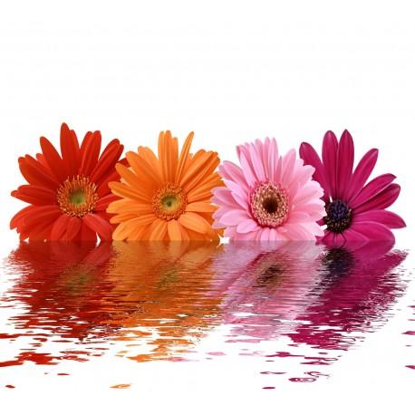 Sticker Lave Vaisselle Fleurs