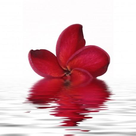Sticker Lave Vaisselle Fleurs Rouge