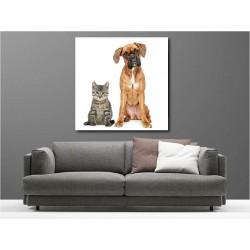 Tableaux toile déco carré chien et chat