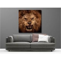 Tableaux toile déco carré rugissement lion