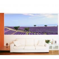Papier peint panoramique Champs de lavande