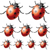 Sticker 9 Coccinelles