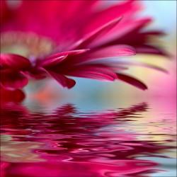Sticker Lave Vaisselle fleur reflet - ou magnet