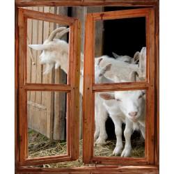 Stickers fenêtre trompe l'oeil Chèvres