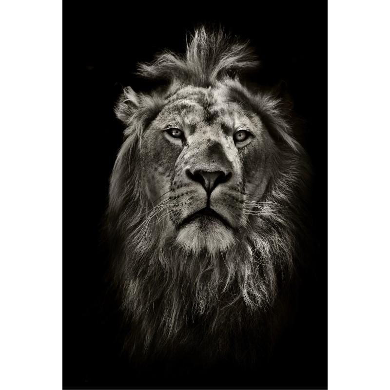 Sticker mural g ant portrait du lion art d co stickers - Sticker mural geant ...
