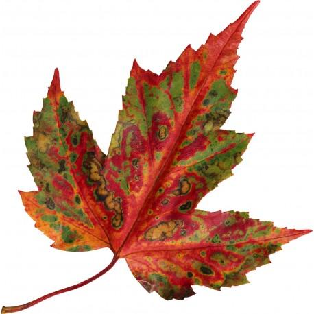 sticker-feuille-d-automne-.jpg