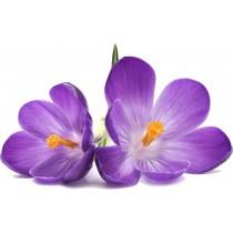 Sticker Fleur violette 026