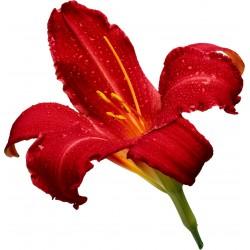Sticker Fleur rouge