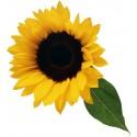 Sticker Fleur Tournesol