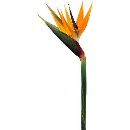 Sticker Fleur Multicolore