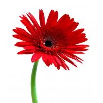 Sticker Fleur pétales rouge