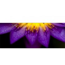 Brise-vue déco Fleur