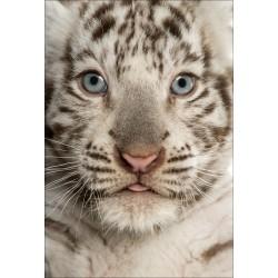 Stickers muraux déco : bébé tigre