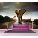 Papier peint grand format Eléphant 2,6x3,6 m