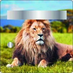 Stickers boites aux lettres Lion 30x30cm
