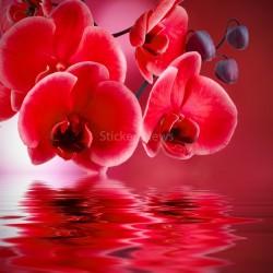Stickers boite aux lettres Orchidées rouge 30x30cm