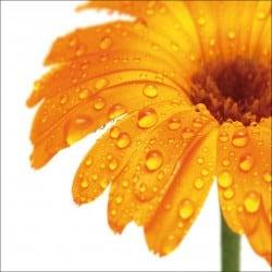 Sticker Lave Vaisselle fleur