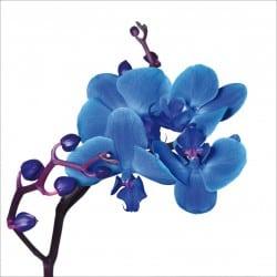 Sticker lave vaisselle Orchidée ou magnet lave vaisselle
