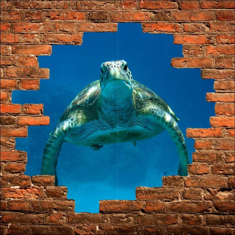 Sticker mural trompe l 39 oeil tortue art d co stickers - Deco trompe l oeil mural ...