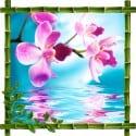 Sticker mural trompe l'oeil déco Fleurs