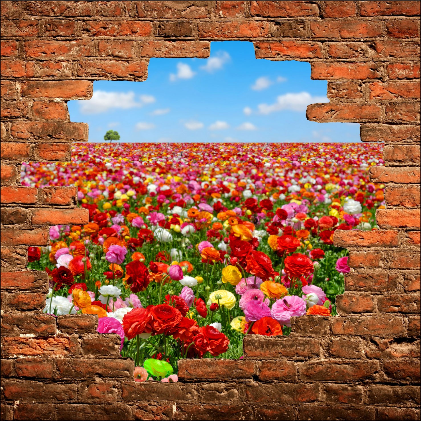 Photo collection champs de fleurs au - Sticker trompe l oeil mural ...