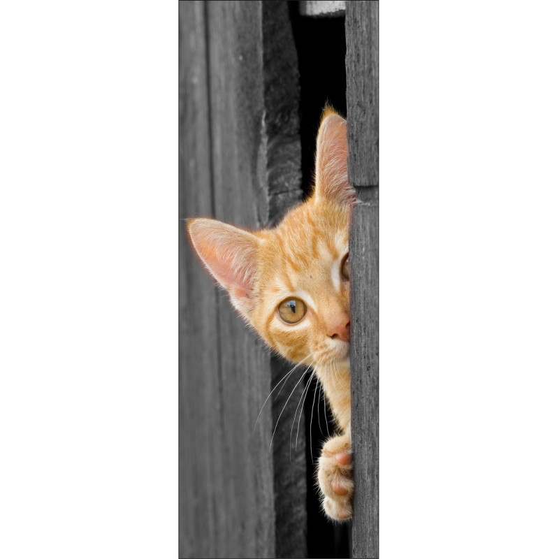Sticker d coration de porte trompe l 39 oeil chat art d co stickers - Trompe oeil pour porte ...