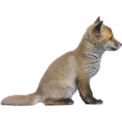 Sticker animal Louveteau