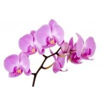 Sticker autocollant Orchidée