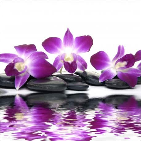 orchidee 8 lettres