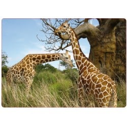 Sticker pc ordinateur portable Girafe