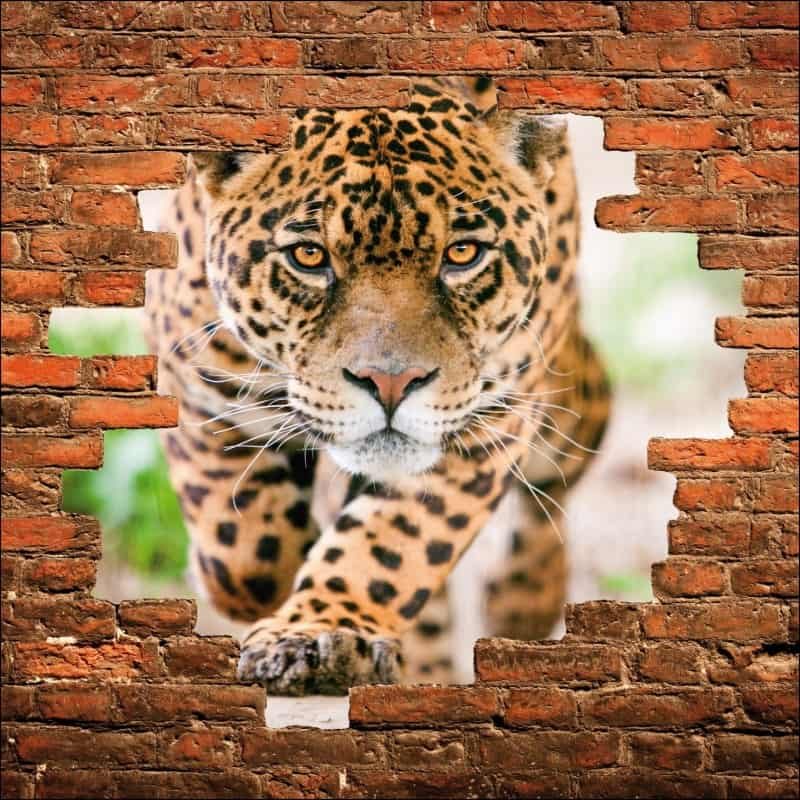 Sticker mural trompe l/'oeil mur de pierre perroquets réf 841