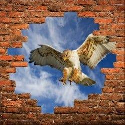 Sticker mural trompe l'oeil aigle